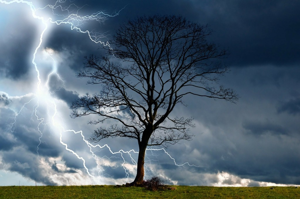 Tree in a lightning storm